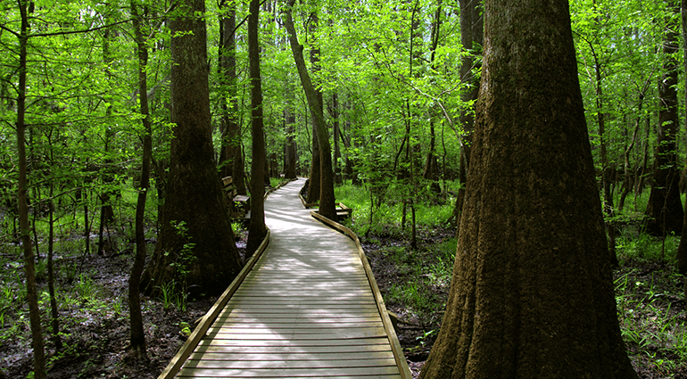 Boardwalk trail at Congaree National Park