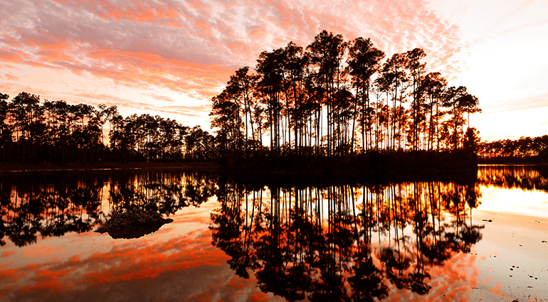 Trees at sunset at Everglades National Park